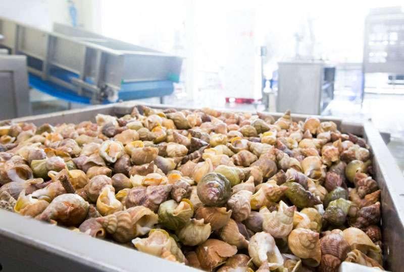 Het GeluidBuro Bedrijven en Industrie Lenger Seafoods Harlingen